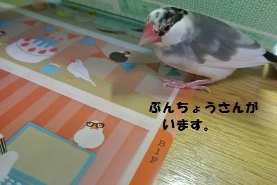 DSC_6733済
