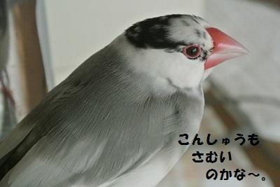 DSC_6778済