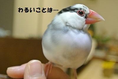 DSC_6810済