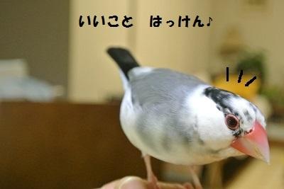 DSC_6816済
