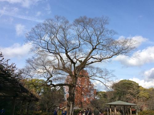 そびえ立つ木