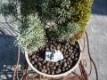 ナンフェア 寄せ植え 胡桃の殻