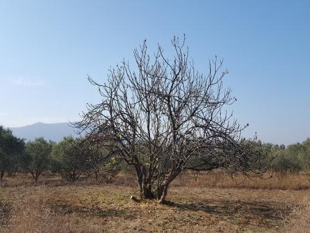 冬の木には隠れた生命力を感じます