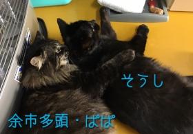 ぱぱ_170208_0002