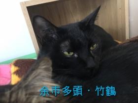 竹鶴_170208_0003