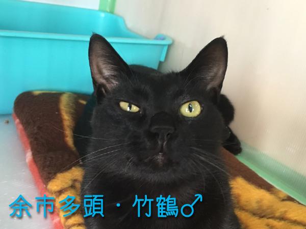 竹鶴_170208_0005