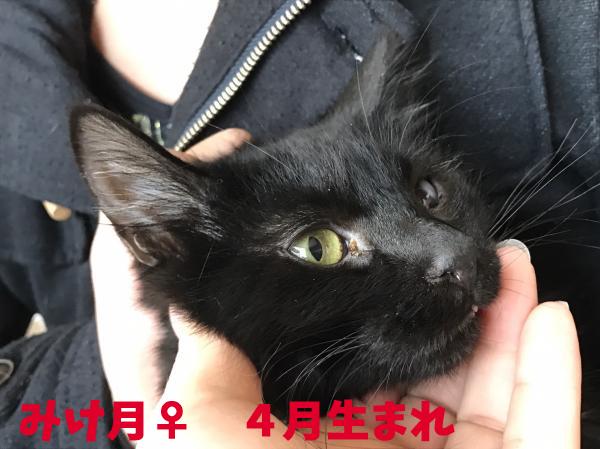 miketuki_convert_20161110214002.jpg