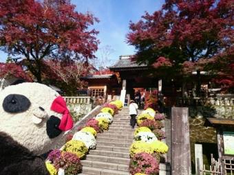 おばぶ秋の修善寺