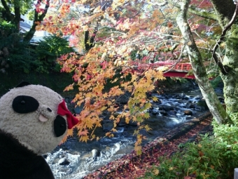 桂川沿いの紅葉
