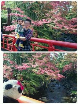 紅葉とパチリ