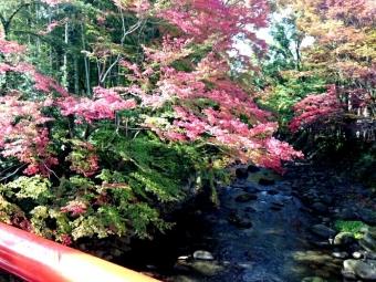 桂川沿いの紅葉2016