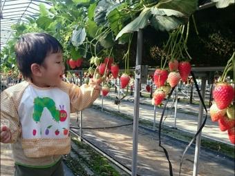 こばぶイチゴパラダイス