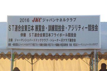 DSC_0013_20161224194353bb7.jpg