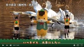 ミンナノグンマ多々良沼の白鳥