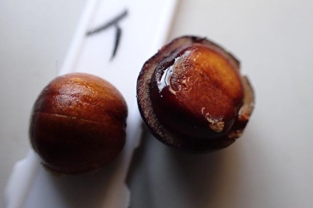 シャリンバイの]果肉と種子