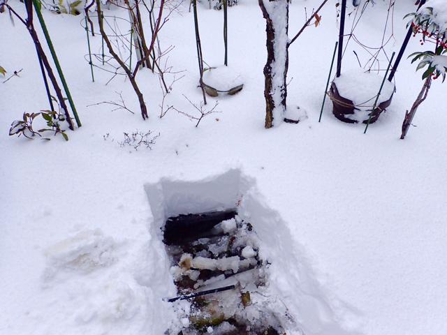 雪の朝(昨年)