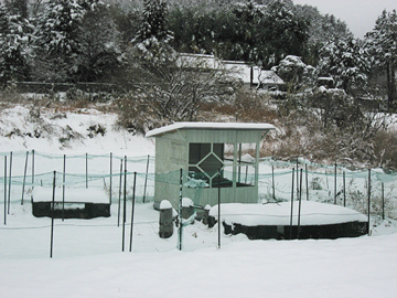 2016初雪1