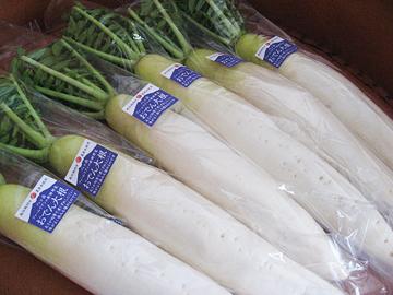 2016冬野菜1