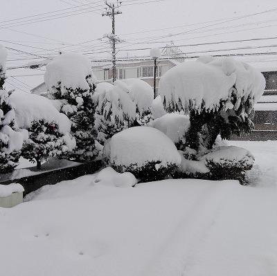 雪がやばい