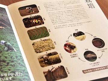華密恋(カミツレン)のパンフレット