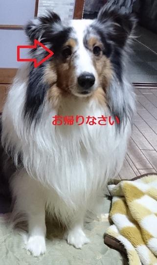 DSC_0109_20170117033707101.jpg