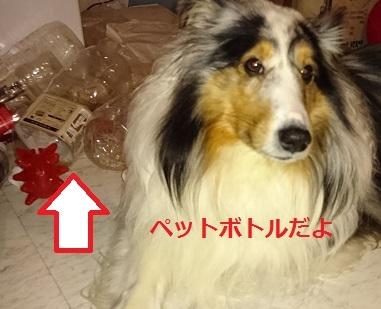 DSC_0402_20170131020608279.jpg