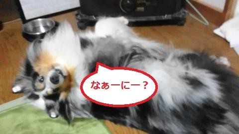 MOV_0216(4).jpg
