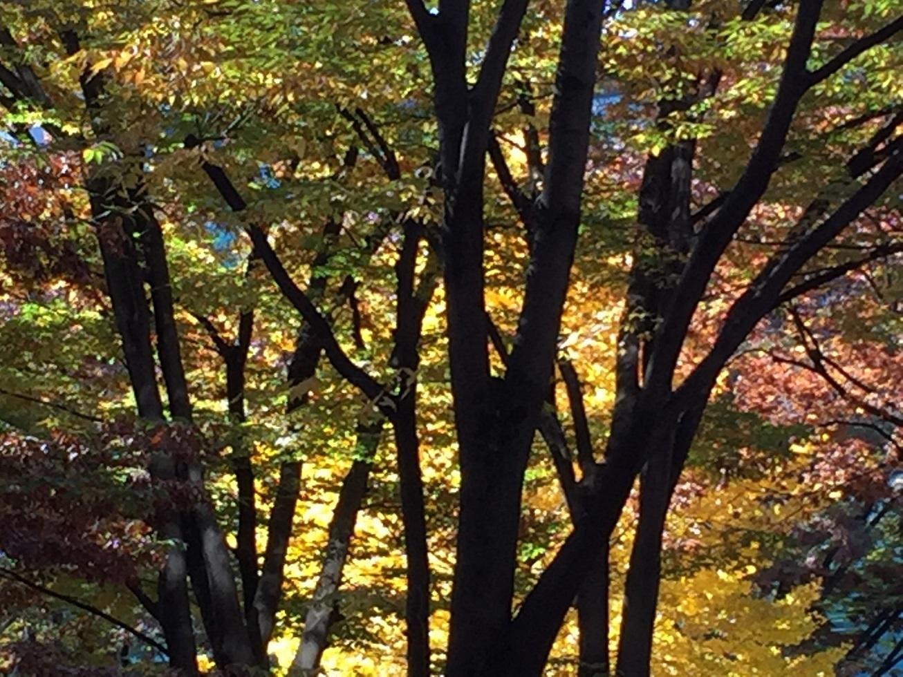 秋の新宿公園