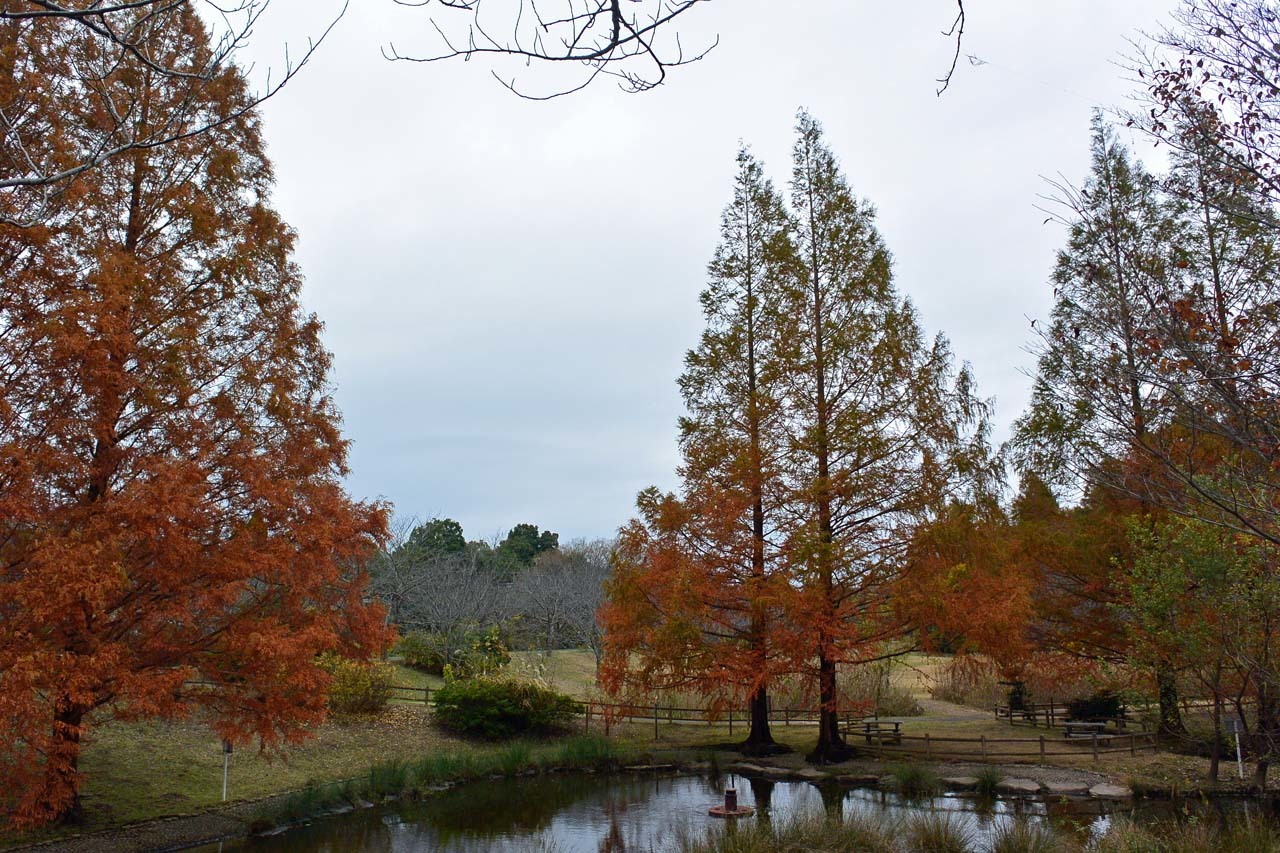 DSC_2257宮の森