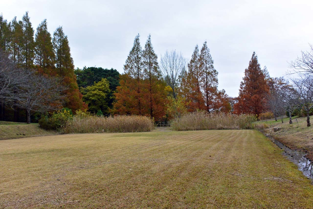DSC_2238宮の森