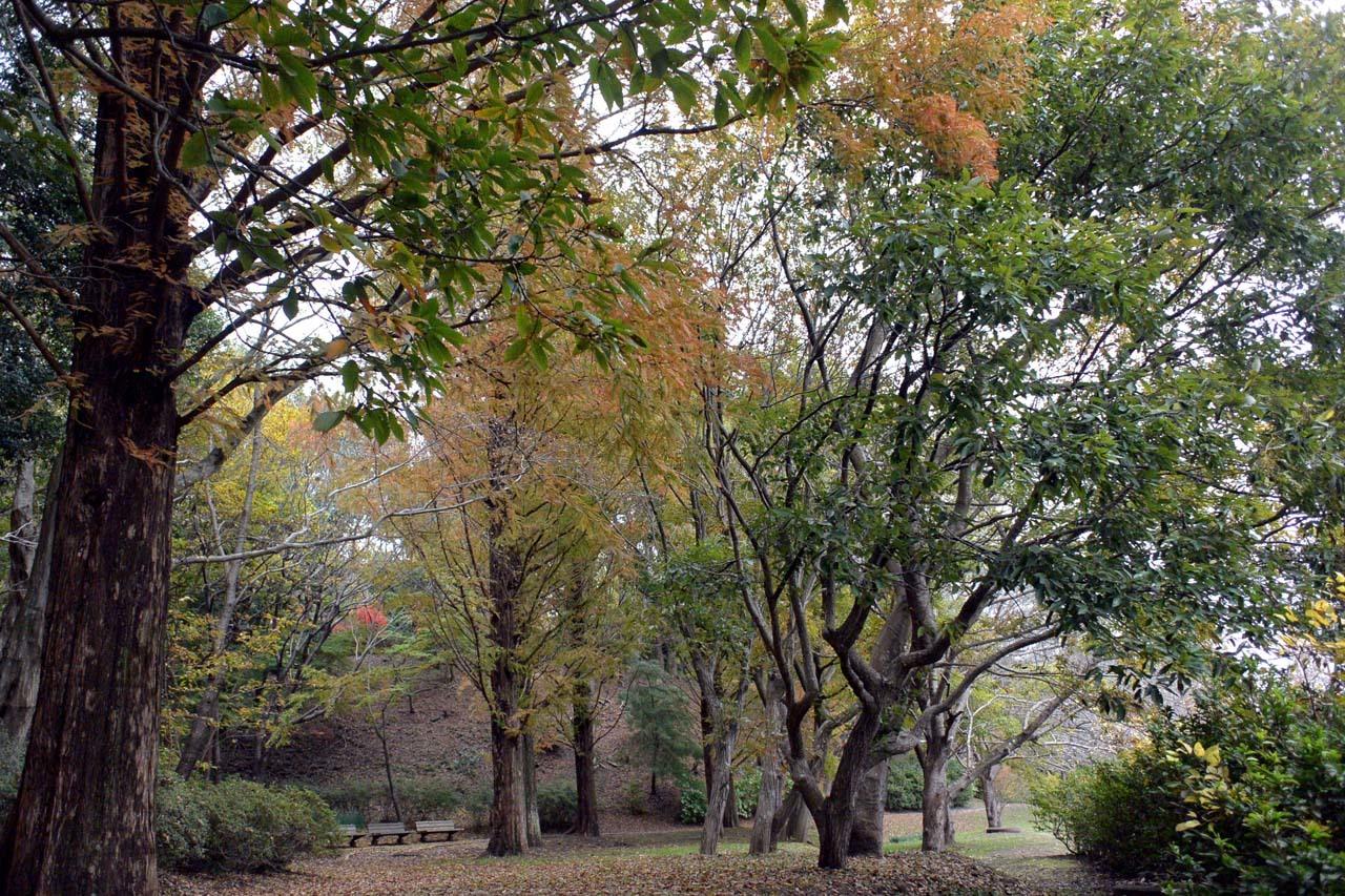 DSC_2244宮の森