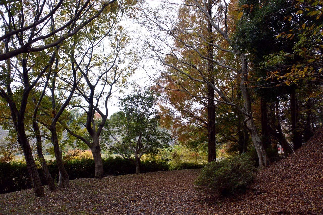 DSC_2242宮の森