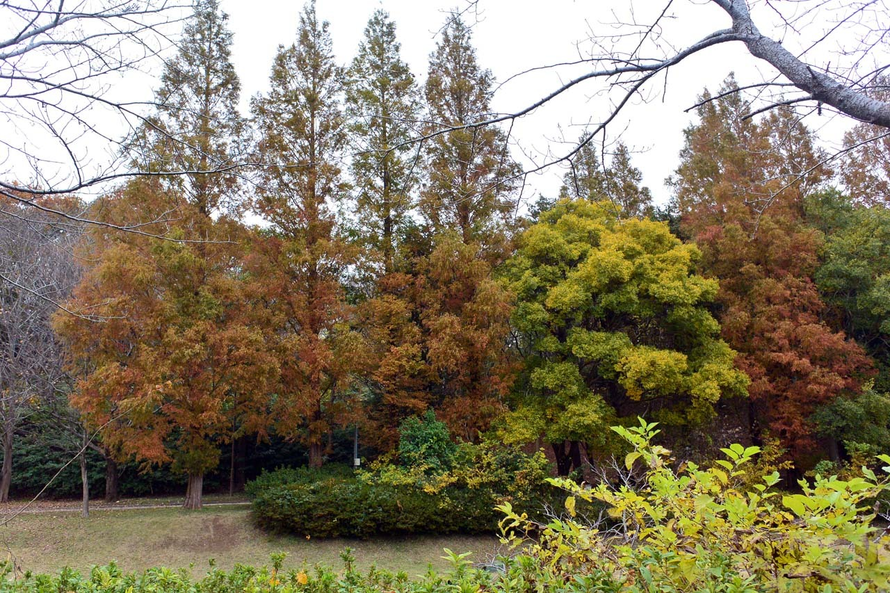 DSC_2251宮の森
