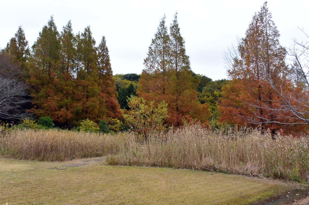 DSC_2253宮の森
