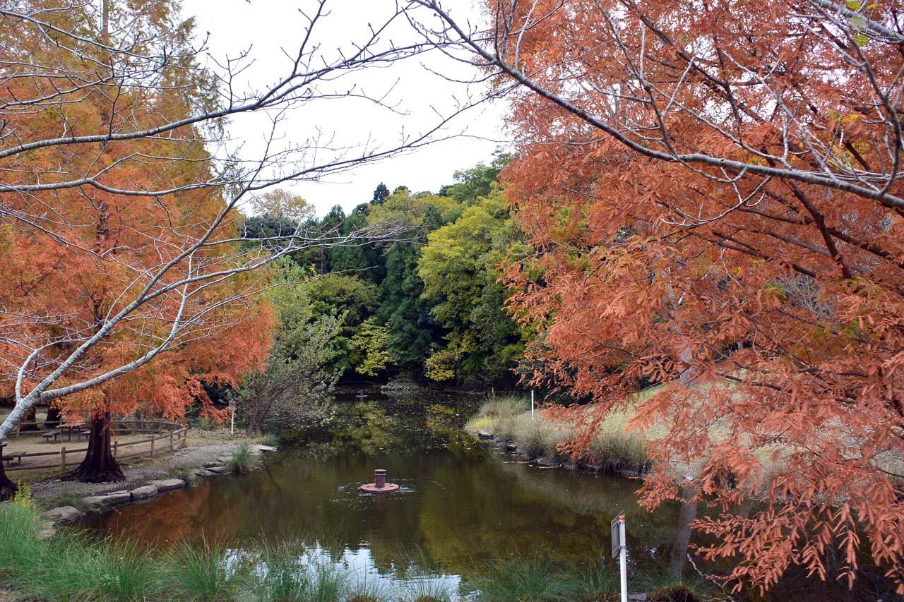 DSC_2254宮の森