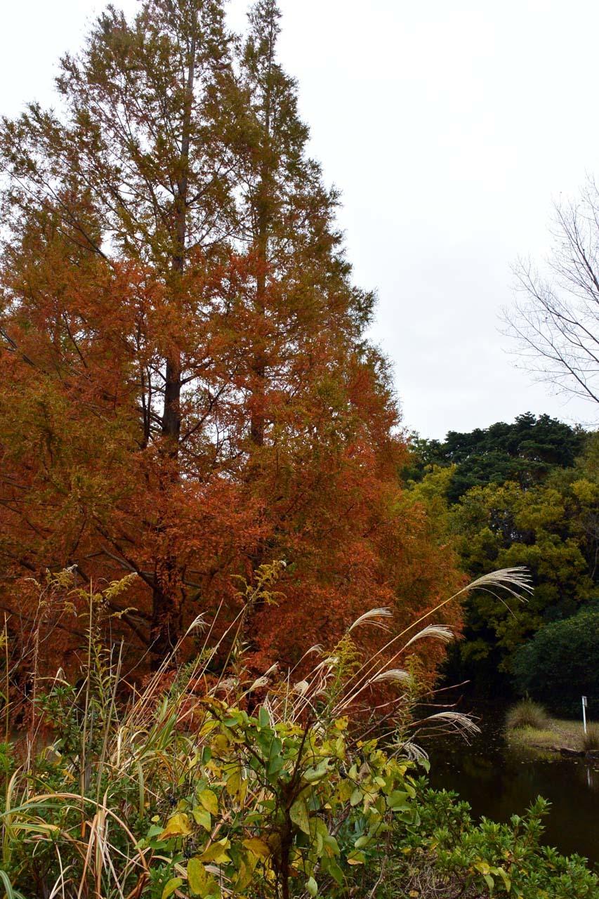 DSC_2261宮の森