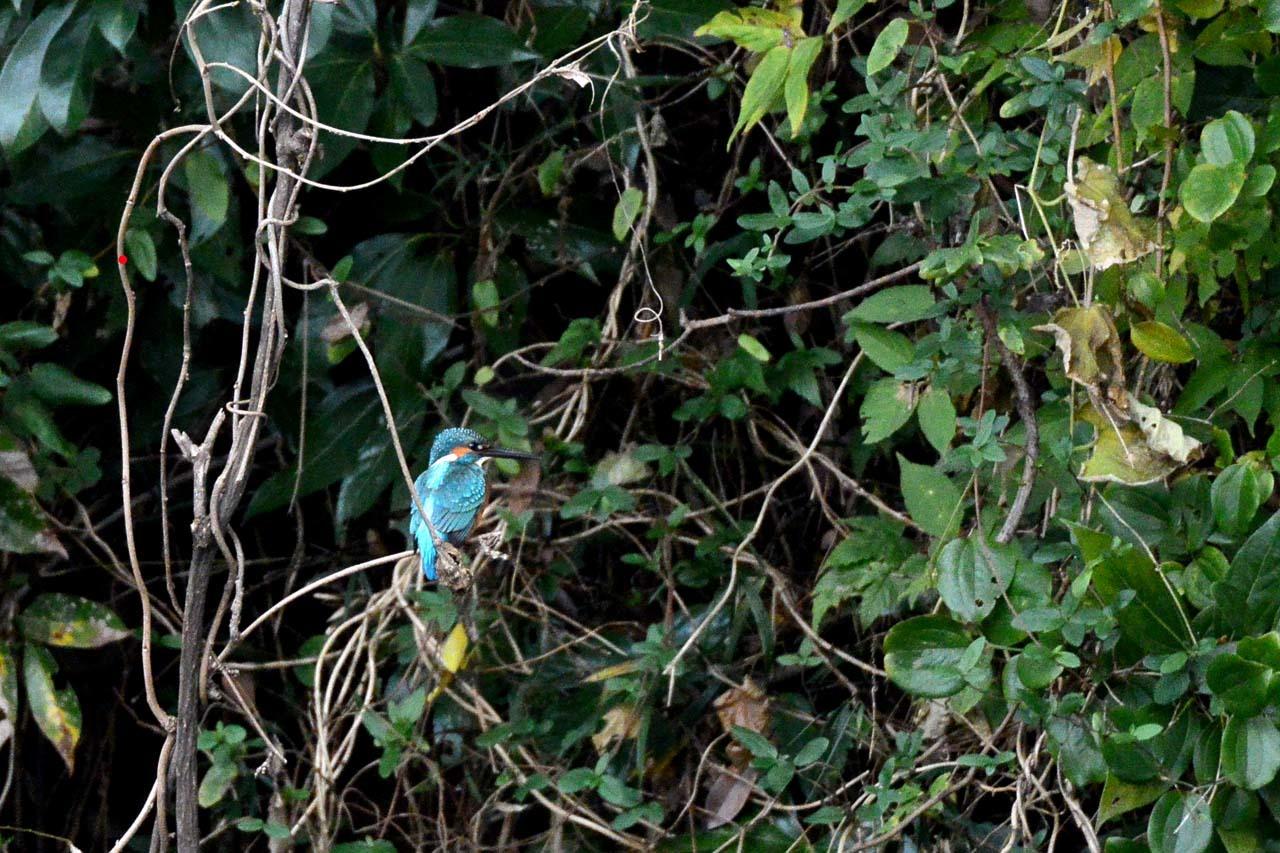 DSC_2673宮の森
