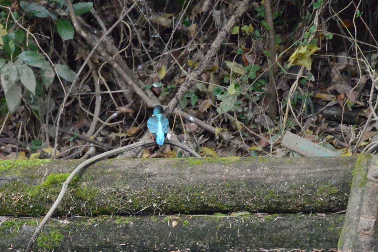 DSC_3249今日の宮の森
