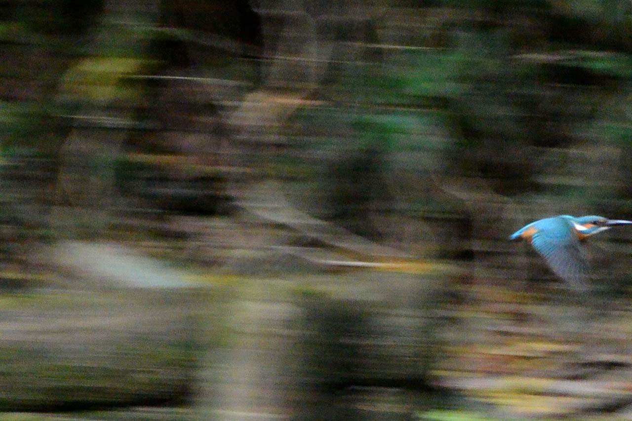 DSC_3270今日の宮の森