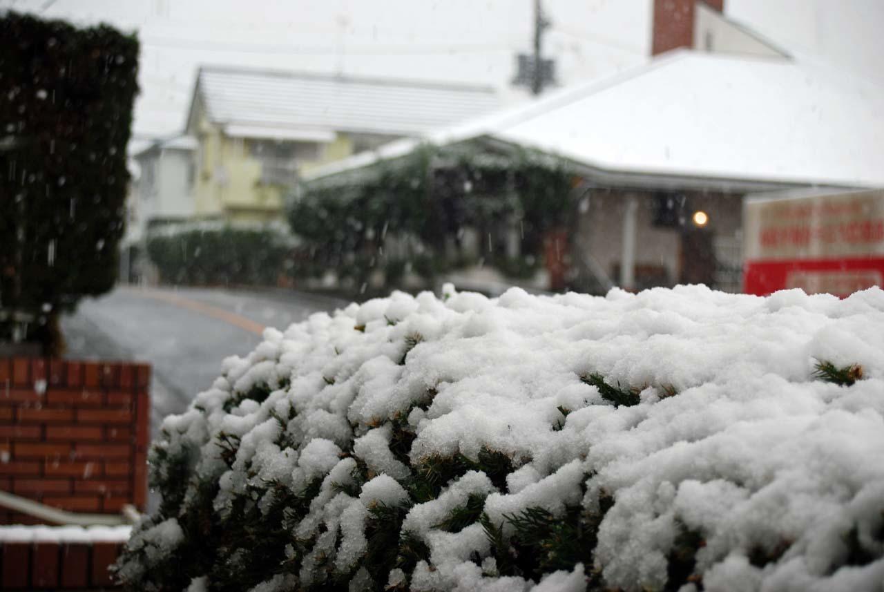 DSC_9993初雪