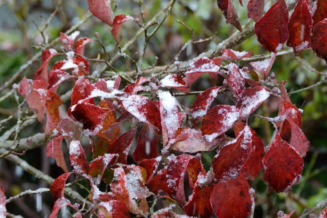 DSC_3341初雪