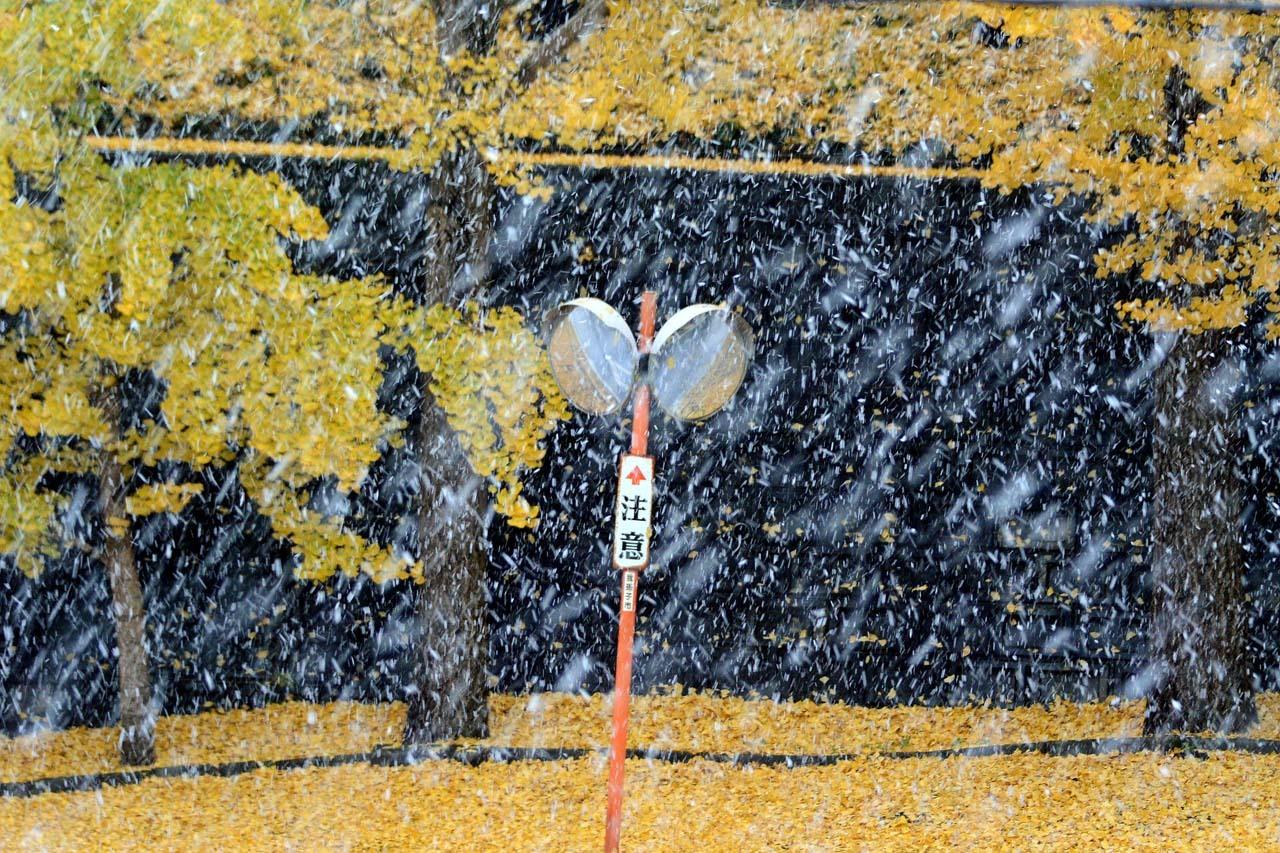 DSC_3346初雪