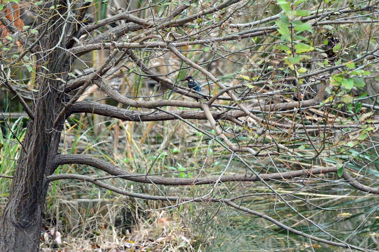 DSC_3326今日の宮の森
