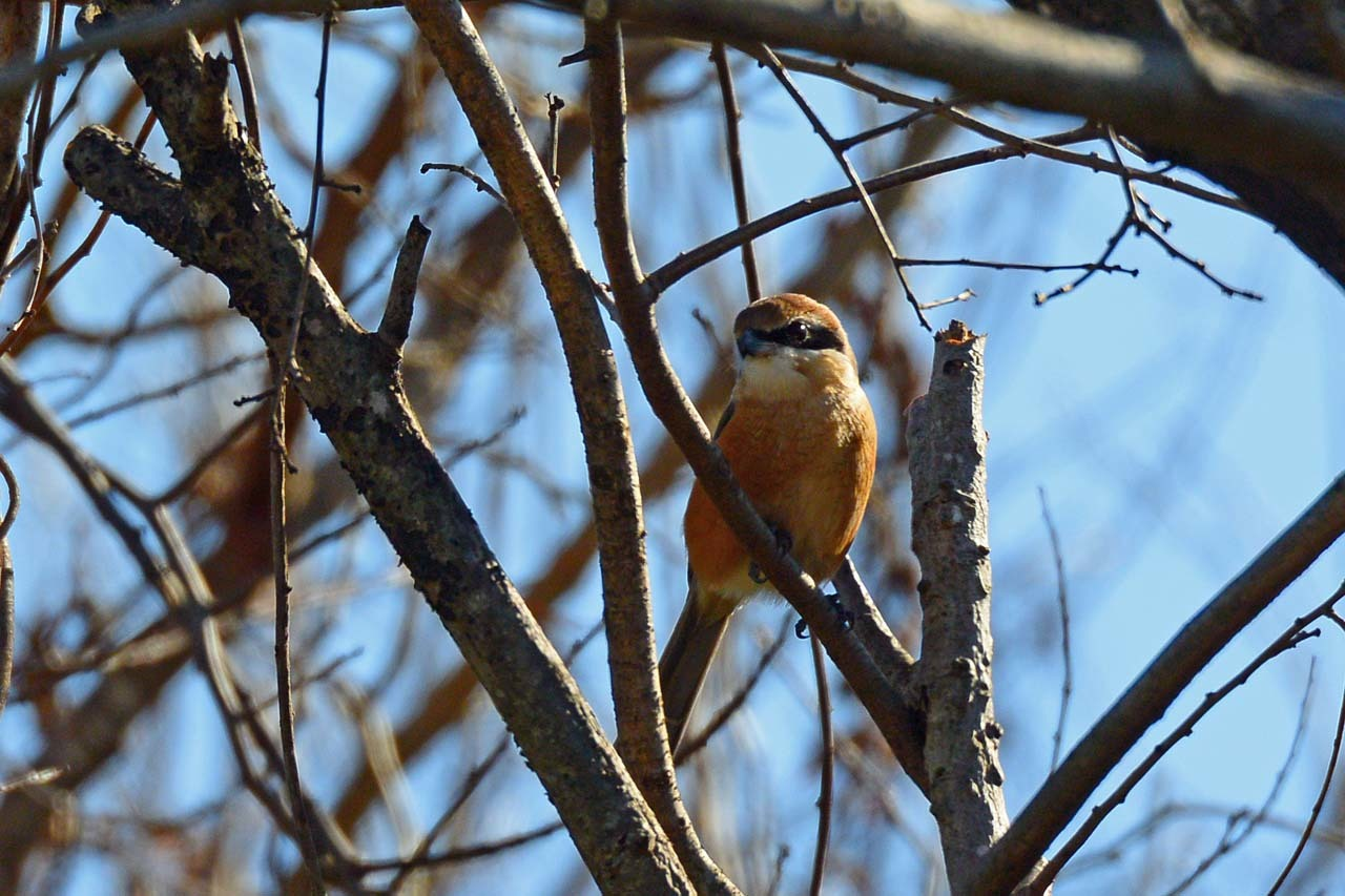 DSC_5551今日の鳥
