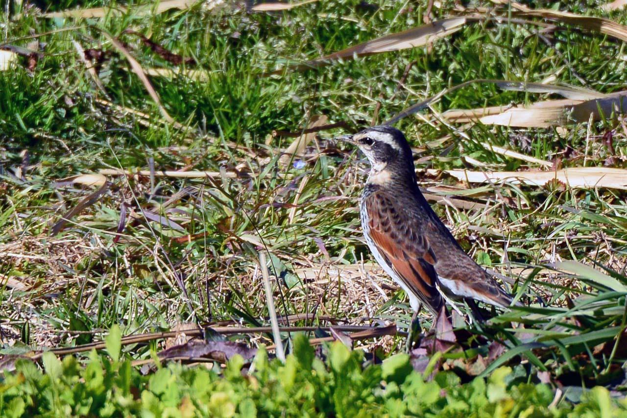 DSC_5596今日の鳥