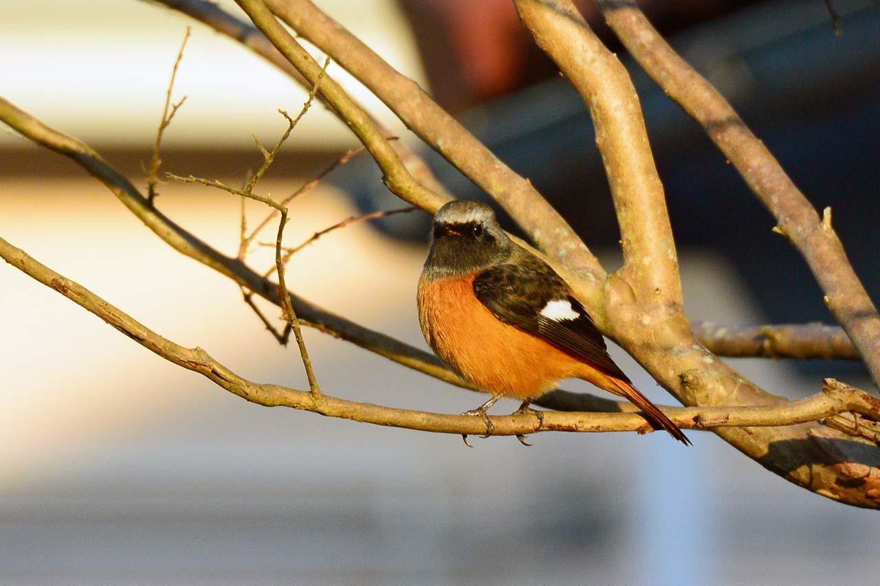 DSC_5853今日の鳥