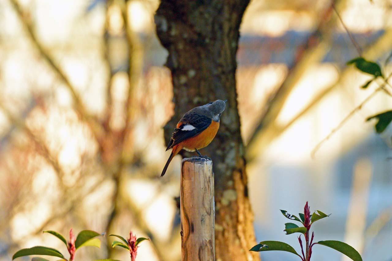 DSC_5866今日の鳥