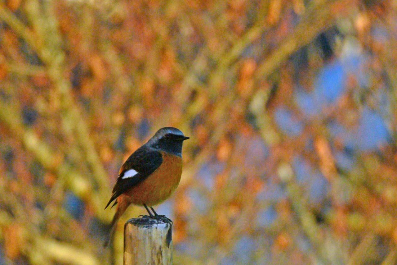 DSC_5869今日の鳥