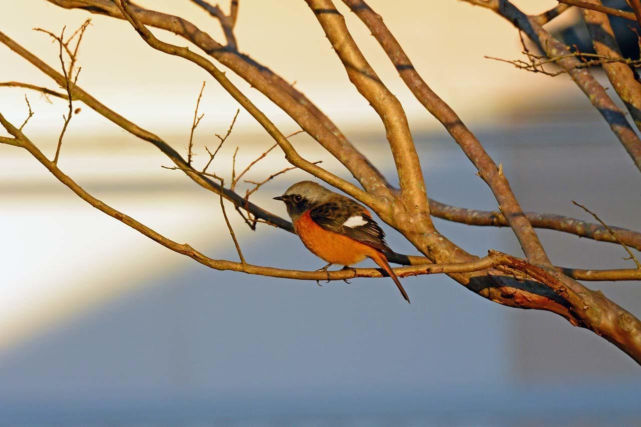 DSC_5845今日の鳥