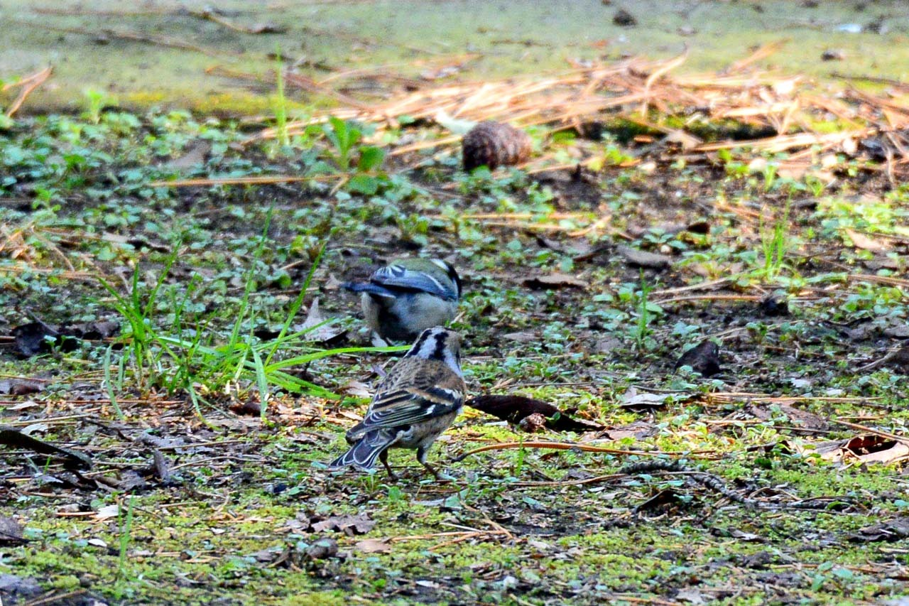 DSC_6482今日の鳥